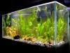 Sfaturi utile pentru oxigenarea apei din acvariu