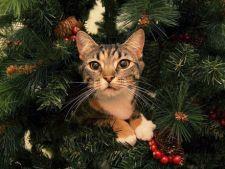 pericole de craciun pentru pisica