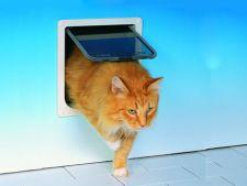 usita pentru pisici