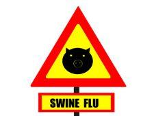 gripa porcina