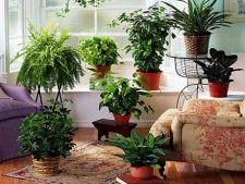 10 plante de apartament cu efecte toxice
