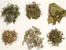 Efectele nocive ale plantelor etnobotanice interzise de Guvern