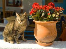 pisica plante