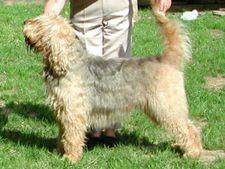 otterhound