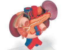 Cum sa iti pastrezi rinichii sanatosi