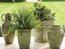 Cum sa ai cele mai frumoase plante de apartament