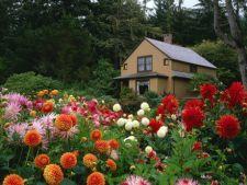 Cele mai toxice flori