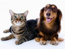 Ce trebuie sa stii despre animalele aflate in calduri