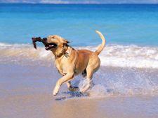 caine plaja