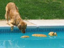 caine piscina