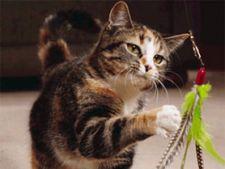 Bolile pisicii de la A la Z - Partea a II-a