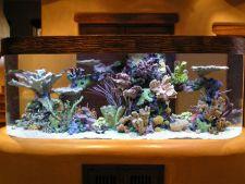 acvariu marin