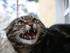 pisica suparata