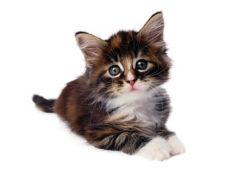 Sugestii de nume pentru pisica - mascul