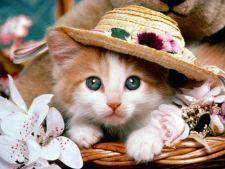 Sugestii de nume pentru pisica - femela