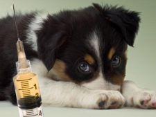 Vaccinuri obligatorii la catei