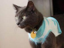 bluza pisica