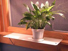 planta geam