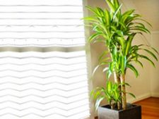 Plante semnificative in Feng Shui