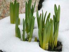 planta iarna