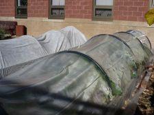 legume tuneluri folie