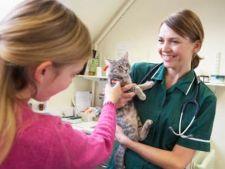 pisica veterinar