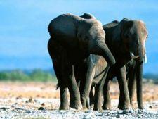10 animale care se indragostesc pe viata