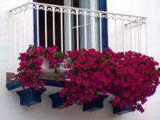 ghiveci balcon