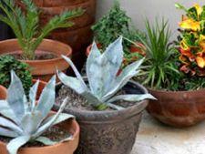 plante exterior