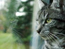 pisici interior