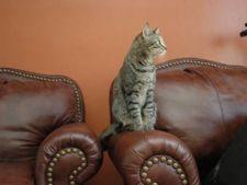 pisica pe canapea