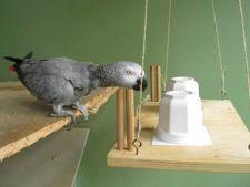 Unii papagali au inteligenta unui copil de 4 ani