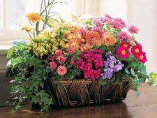 Recipiente ingenioase pentru flori