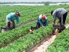 Roman, ucis de conditiile de munca agricola din Italia