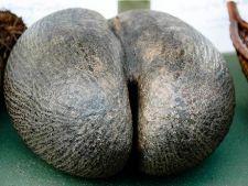 Cadou inedit pentru William si Kate: cel mai afrodisiac fruct din lume