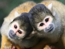 Intamplari cu si despre maimute