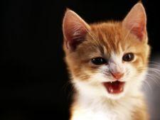 Cum sa iti inveti pisica sa nu mai muste