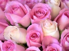 Butasirea corecta a trandafirilor