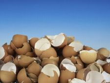 5 metode creative de a folosi cojile de oua in gradina ta!
