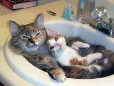 Cele mai interesante lucruri despre pisici