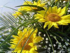 Flori specifice pentru luna august