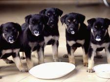 Importanta calciului in alimentatia cainilor