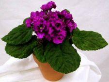 Cele mai potrivite plante de apartament