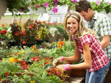 10 moduri de a-ti usura munca in gradina