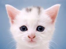 Ingrijirea unei pisici abandonate