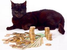 Cum sa economisesti bani ls ingrijirea pisicii