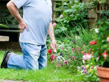 Cum sa te protejezi de durerile de spate in gradina