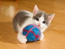 Hiperactivitatea la puii de pisica