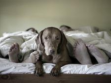 Cand animalul de companie devine o problema in relatie