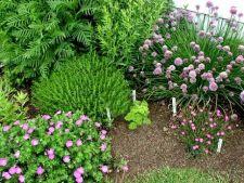 Plante folositoare pentru controlul daunatorilor